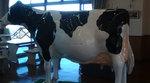 八ヶ岳牧場の牛